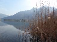 Lago di Endine Spinone al Lago