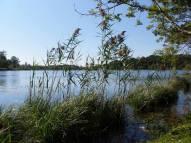 Scorci di lago