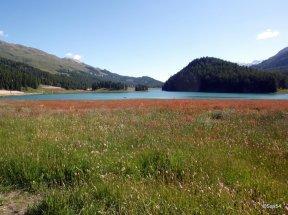 Engadina lago di Silvaplana