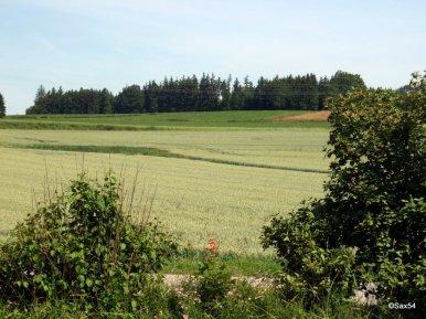 Germania campi coltivati